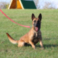 f5.jpgprotection dog,knut fuchs, peter scherk, florian knabl, dogsports4u, marcus hampton, ot vitosha, good of war, mohawk malinois,further moor, mecbergers,conan von clan der Wolfe, malinois,malinois puppies,purebred blegian malinois puppies,purebred malinois puppies,dvg,akc,usca,awdf,schutzhund usa,police k9,knvp,healthy belgian malinois puppies,belgian shepherd dogs,fmbb,dmc,family protection dog,agility,search and rescue,knvp,import dogs