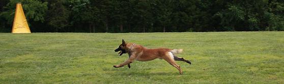 protection dog,knut fuchs, peter scherk, florian knabl, dogsports4u, marcus hampton, ot vitosha, good of war, mohawk malinois,further moor, mecbergers,conan von clan der Wolfe, malinois,malinois puppies,purebred blegian malinois puppies,purebred malinois puppies,dvg,akc,usca,awdf,schutzhund usa,police k9,knvp,healthy belgian malinois puppies,belgian shepherd dogs,fmbb,dmc,family protection dog,agility,search and rescue,knvp,import dogs