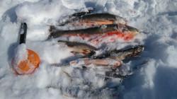 Isfiske på Halstjønna