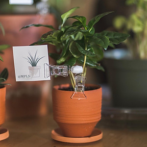 MPLS Indoor Plants