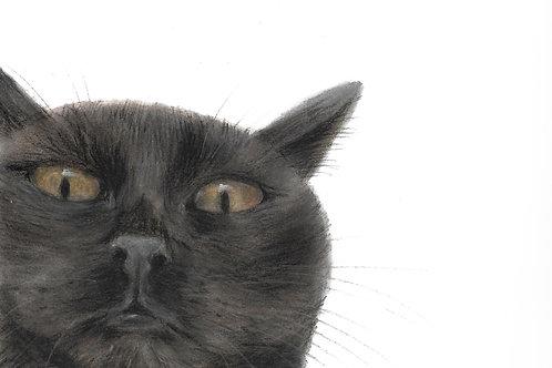 Cimi cat painter ポストカード「おはよう くろ」