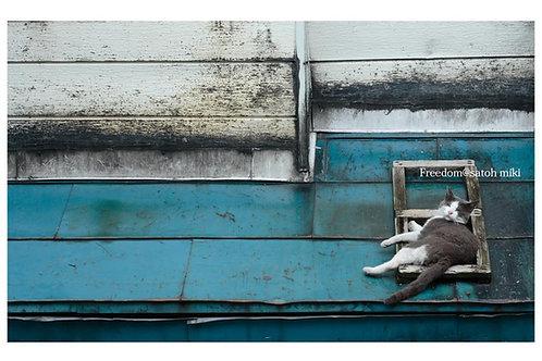 サトウミキ ポストカード「Freedom」