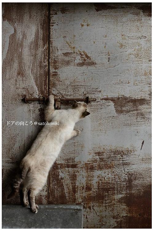 サトウミキ ポストカード「ドアの向こう」