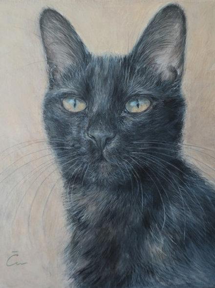 Cimi cat painter ポストカード「蛍」