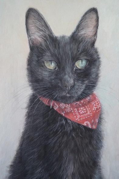 Cimi cat painter ポストカード「黒豆」