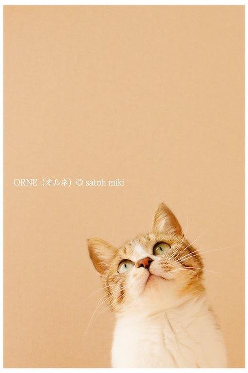 サトウミキ ポストカード「ORNE(オルネ)」