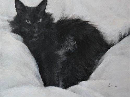 Cimi cat painter ポストカード「JIRO(ジロ)」