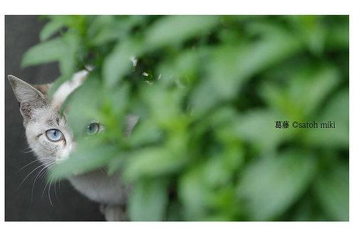 サトウミキ ポストカード「葛藤」