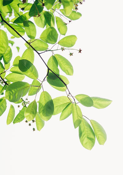 green%20flowering%20plant_edited.jpg