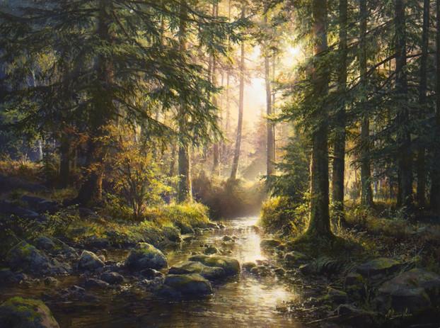 Quiet forest stream