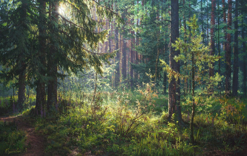 The secret of the morning forest