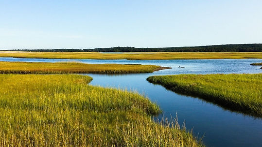 salt marsh view.jpg