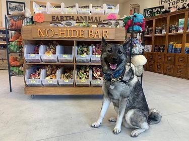 NO HIDE BAR DOG.jpg