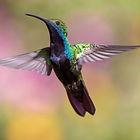hummingbird-1854225_1920.jpg