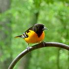 bird-2140675_1920.jpg