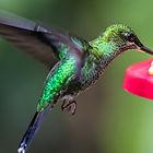 hummingbird-2293297_1920.jpg