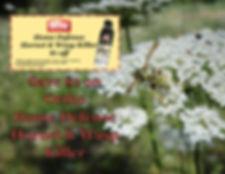 wasp coupon.JPG