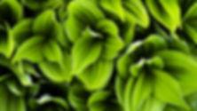 Guérir une Plante avec du Cristal de Roche