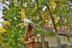 緑あふれる家