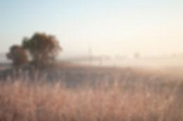 Nachusa Grasslands, little bluestem