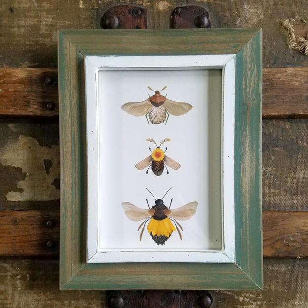 5x7 framed bug collection