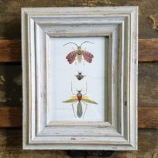 5x7 framed bug print