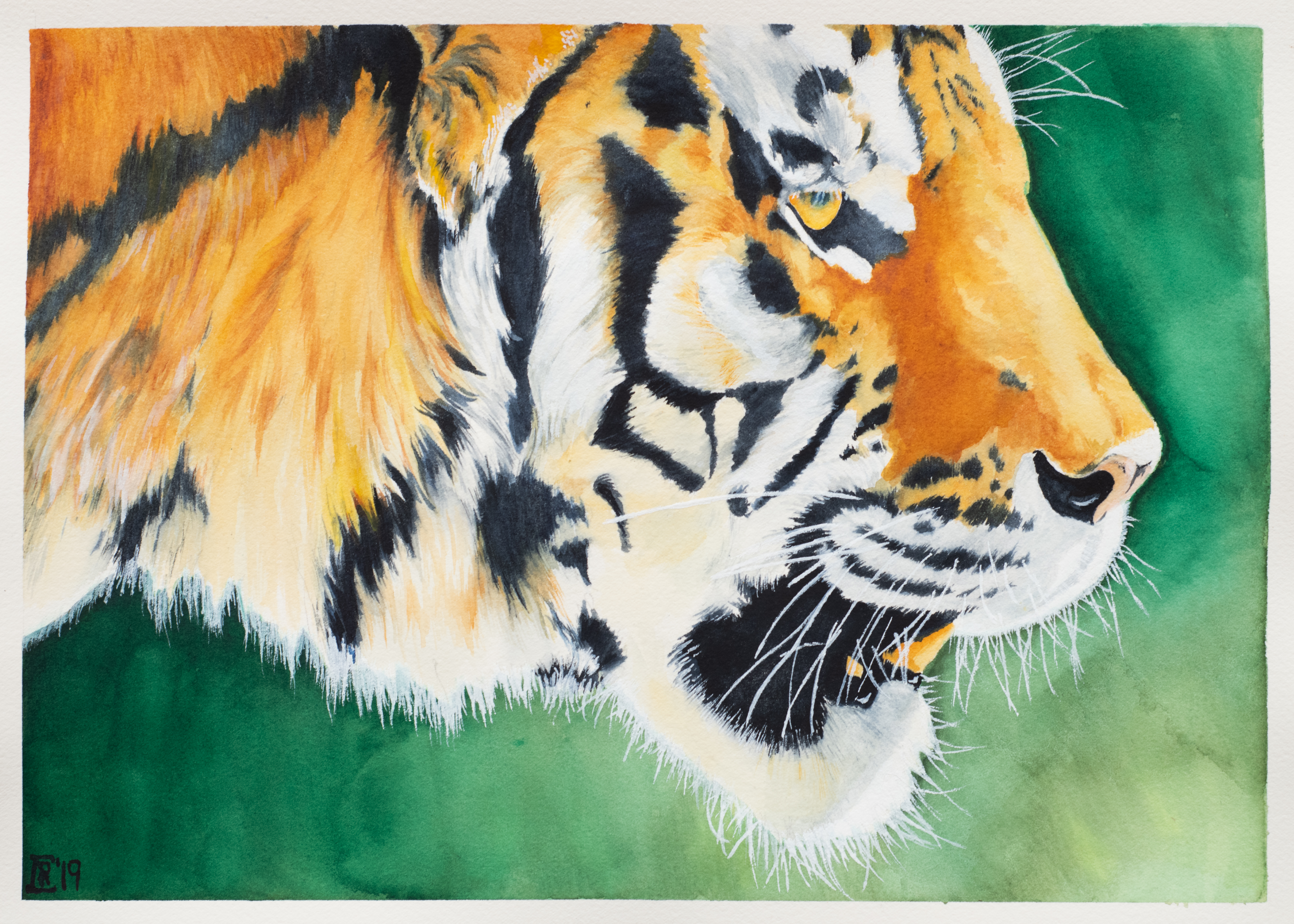 CRC_tiger_©_2019__ARP-5642