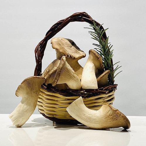 Funghi Cardoncelli - Pleurotus