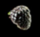 Berries-1-piano.png