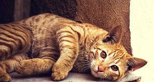 katt_höger_fin.jpg