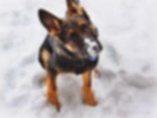 stock-photo-one-animal-close-up-winter-i