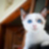 höger_sida_katt.jpeg