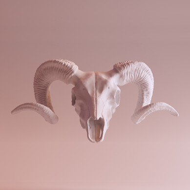 Cráneo Ibex