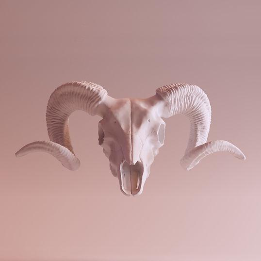 Ibex Skull