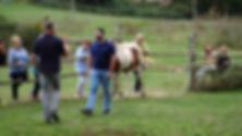 Horses 9.jpg