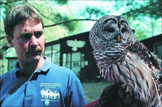 owl, birding, birdwatching, Shaver's Creek