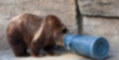 Bear eating trash.jpg