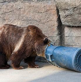 bear in trash.jpg