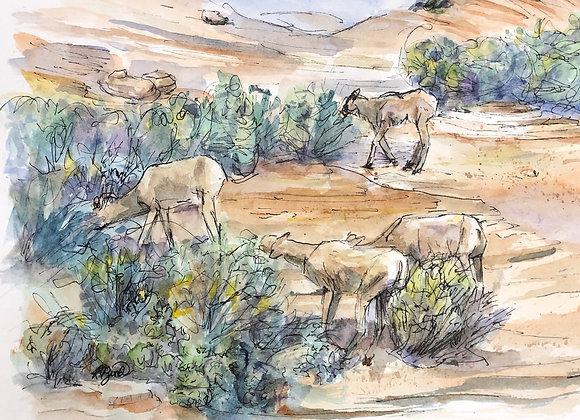 Watercolor Bighorn sheep