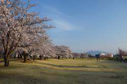 学園の杜公園_20210327 (2)