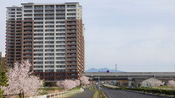 千本桜とマンション