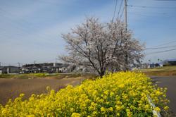 蓮沼川第1調節池_20210327 (1)