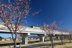 学園南公園_20210303 (1)