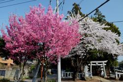 20180329鹿島神社 (3)