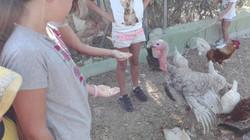 Contacto con los animales