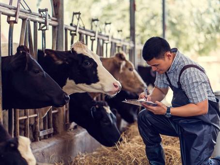 Zootecnia: saiba mais sobre essa profissão