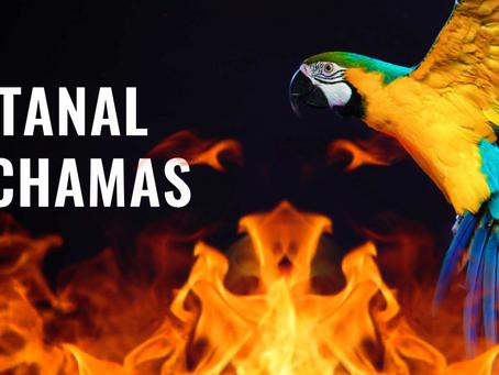 O Pantanal está queimando! Entenda qual o papel do Zootecnista no combate as queimadas