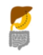 BIld-Magen-op-homepage_bearbeitet.png