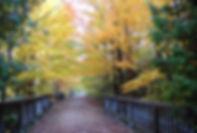 geogian trail.jpg