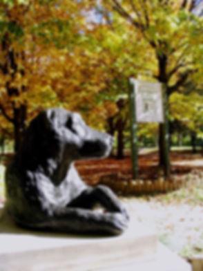 Beautiful Joe at Park- autumn- viv copy_edited.jpg